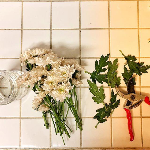Late night summer R&R. #flowers #spray #cutflowers #palepinks #green #secateurs