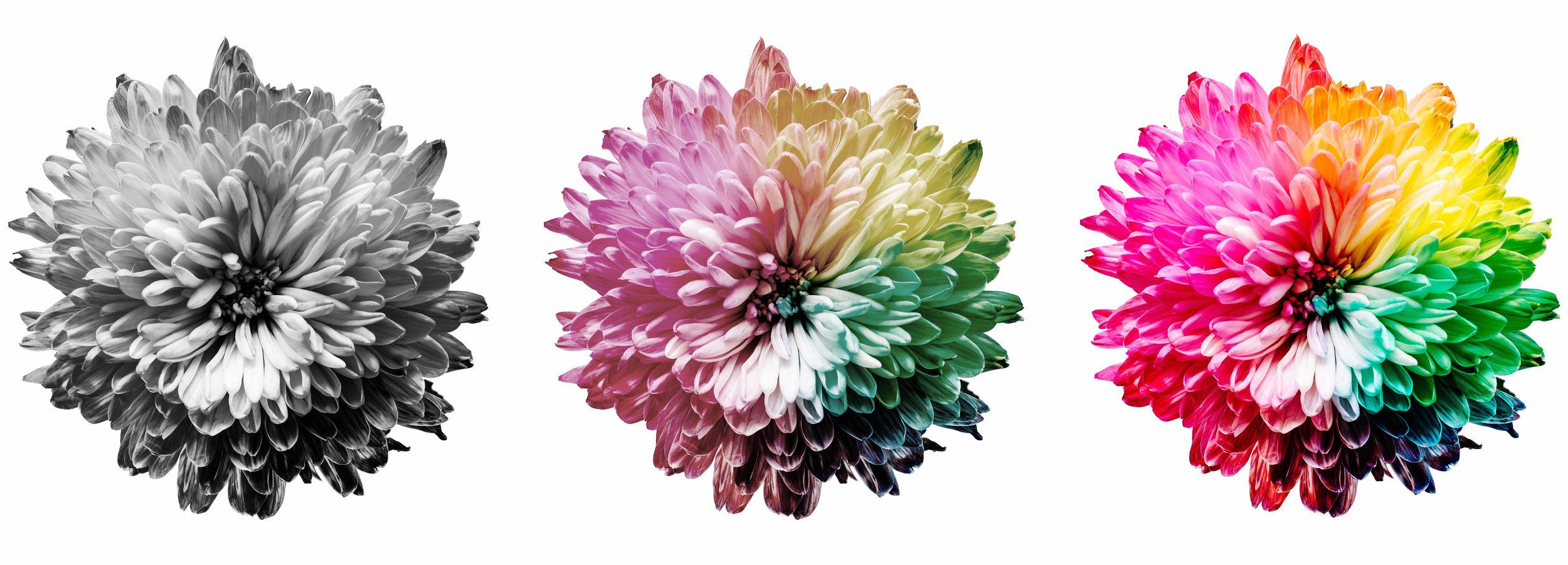 fleur evolution.jpg
