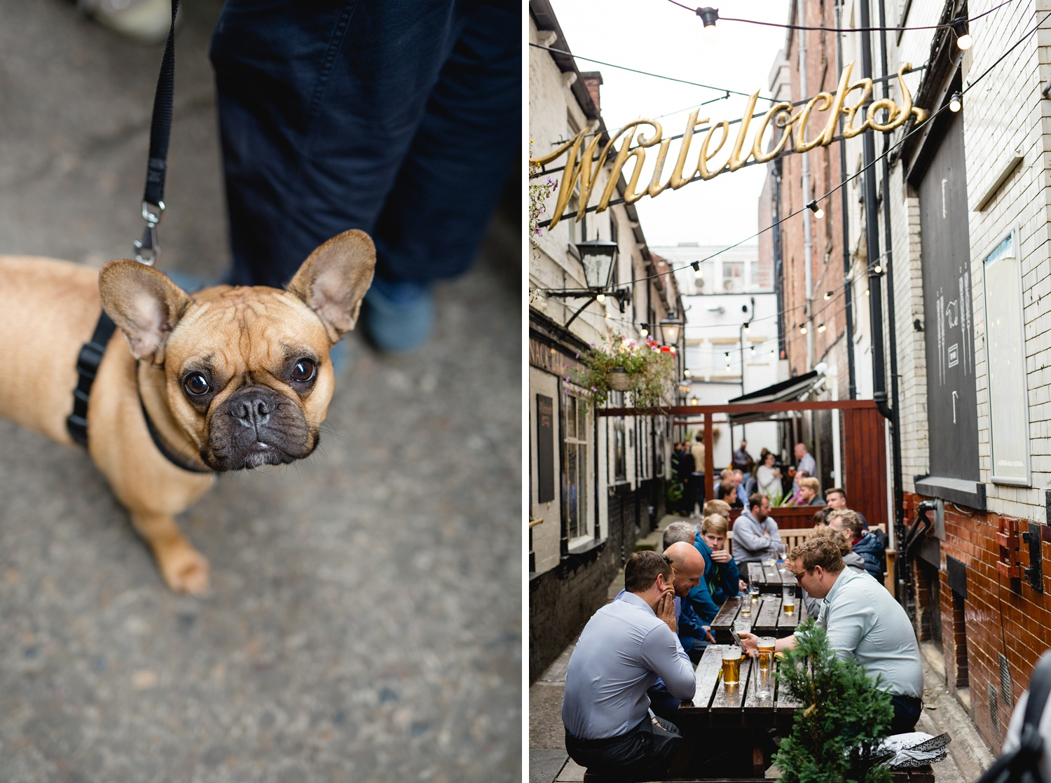 French bulldog at whitelocks pub during leeds beer week