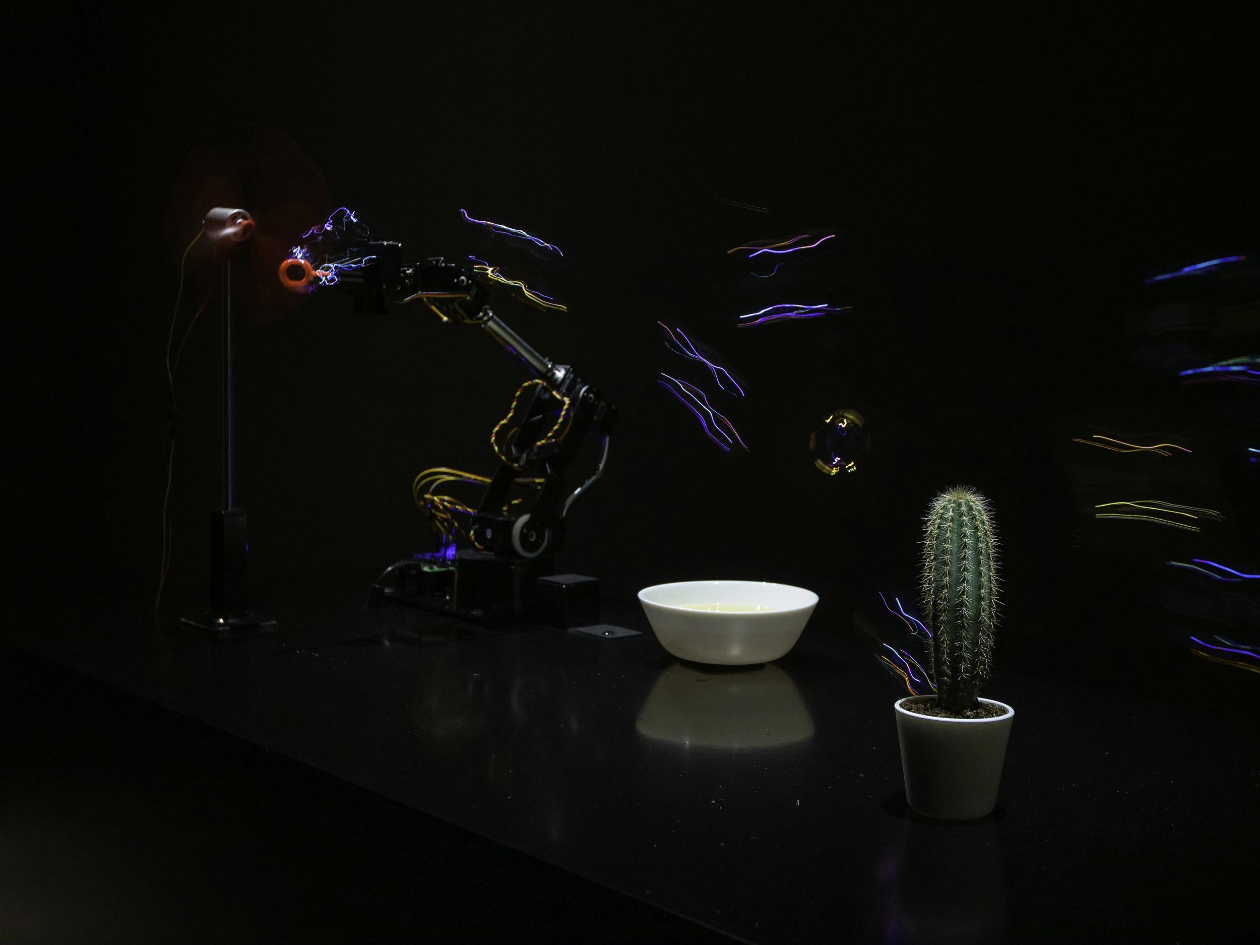 Bubble Machine vs Cactus.jpg