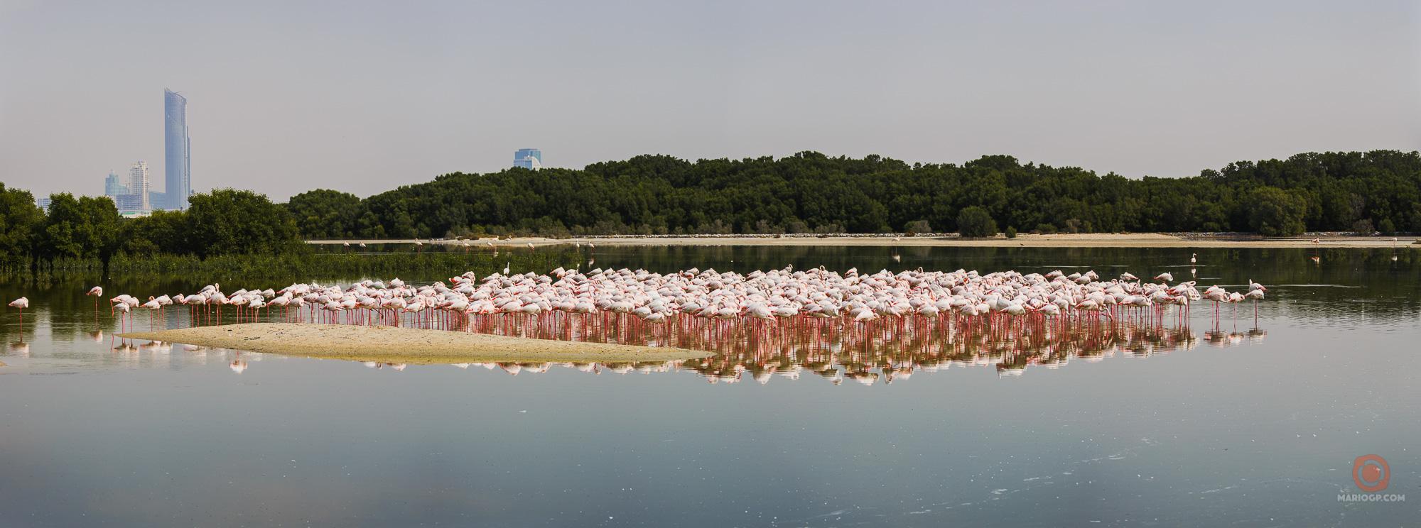 Ras al Khor Wildlife Sanctuary in Dubai.