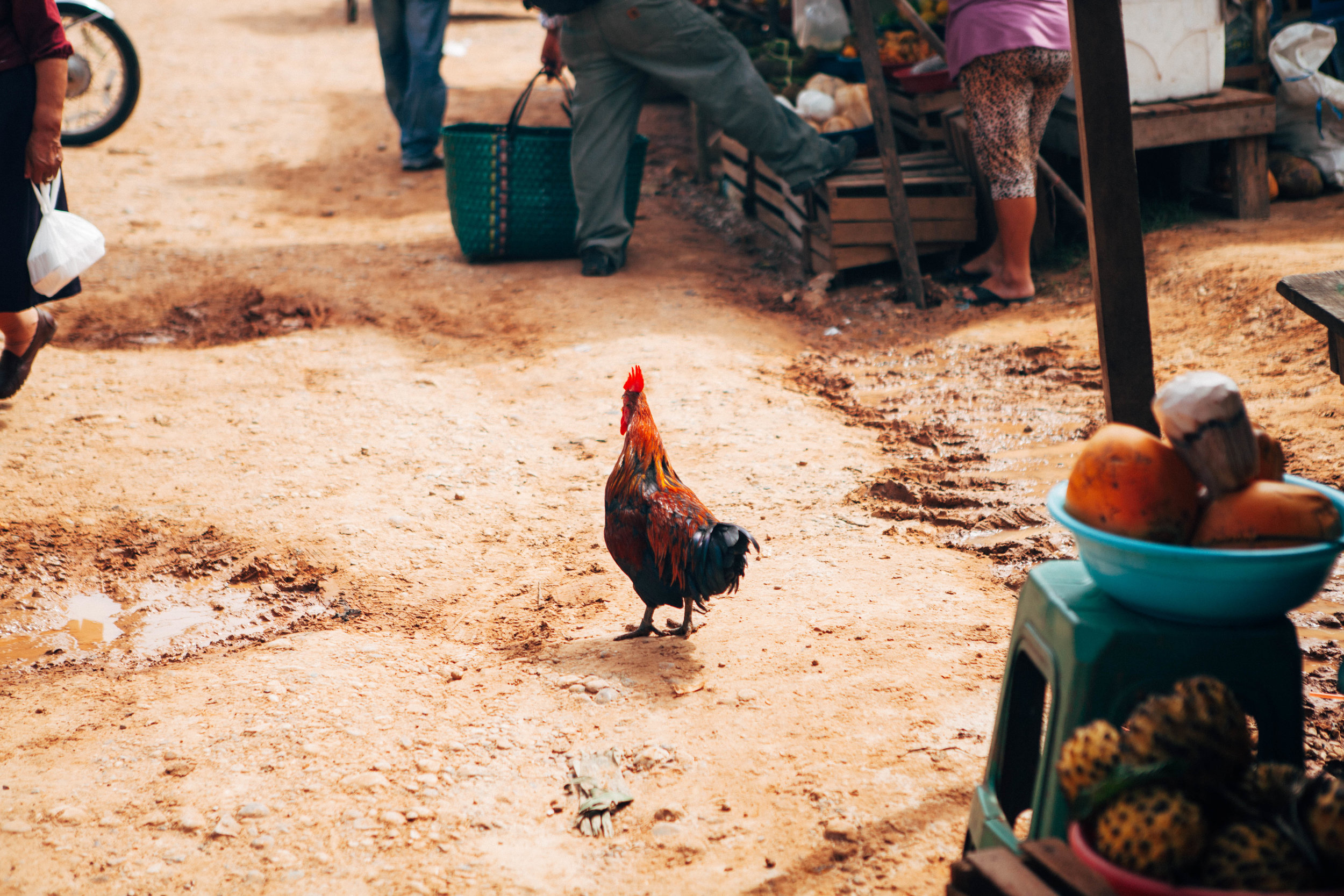 the rooster-1.jpg