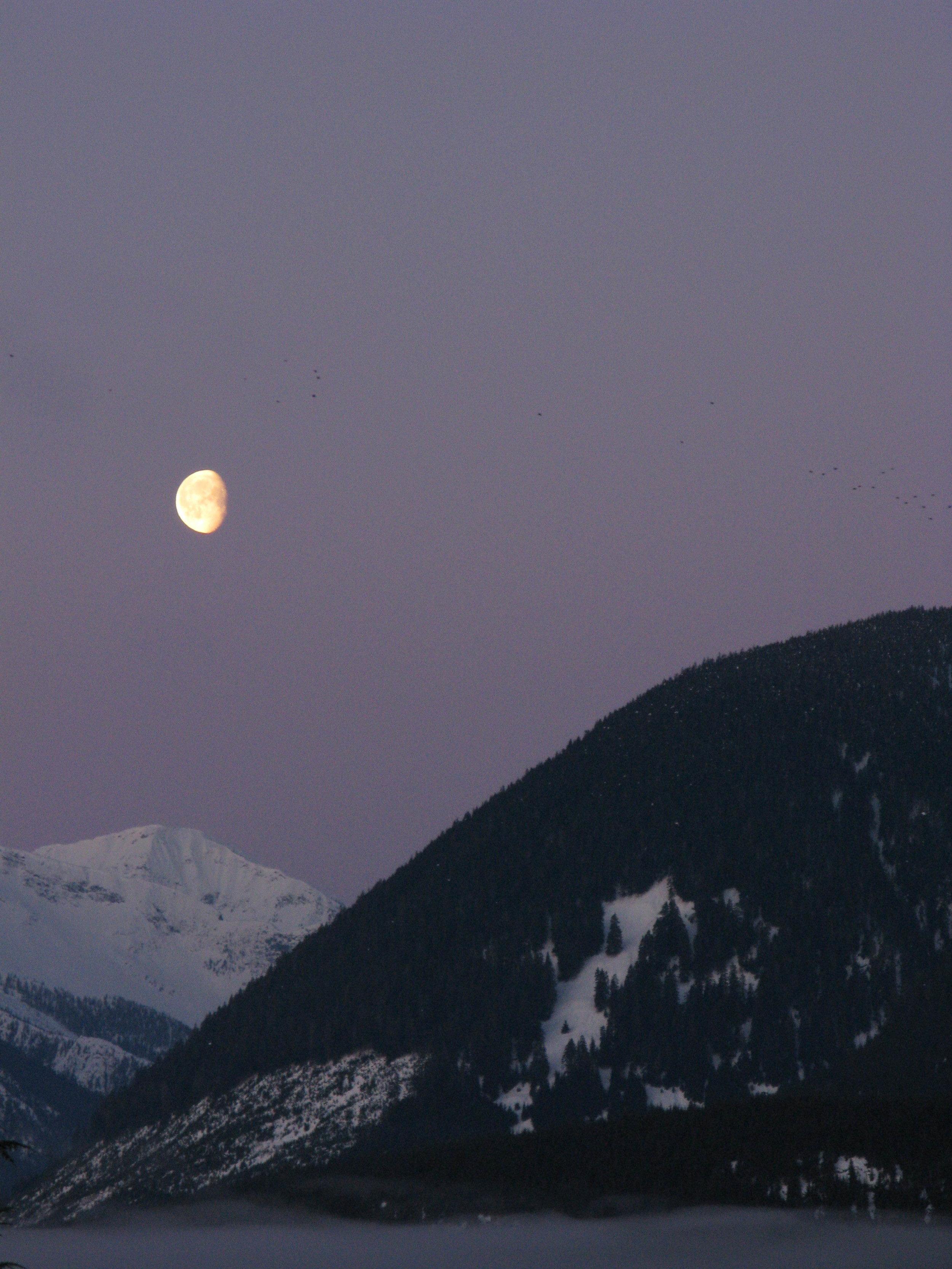 Early Moon /photo: Dano Pendygrasse