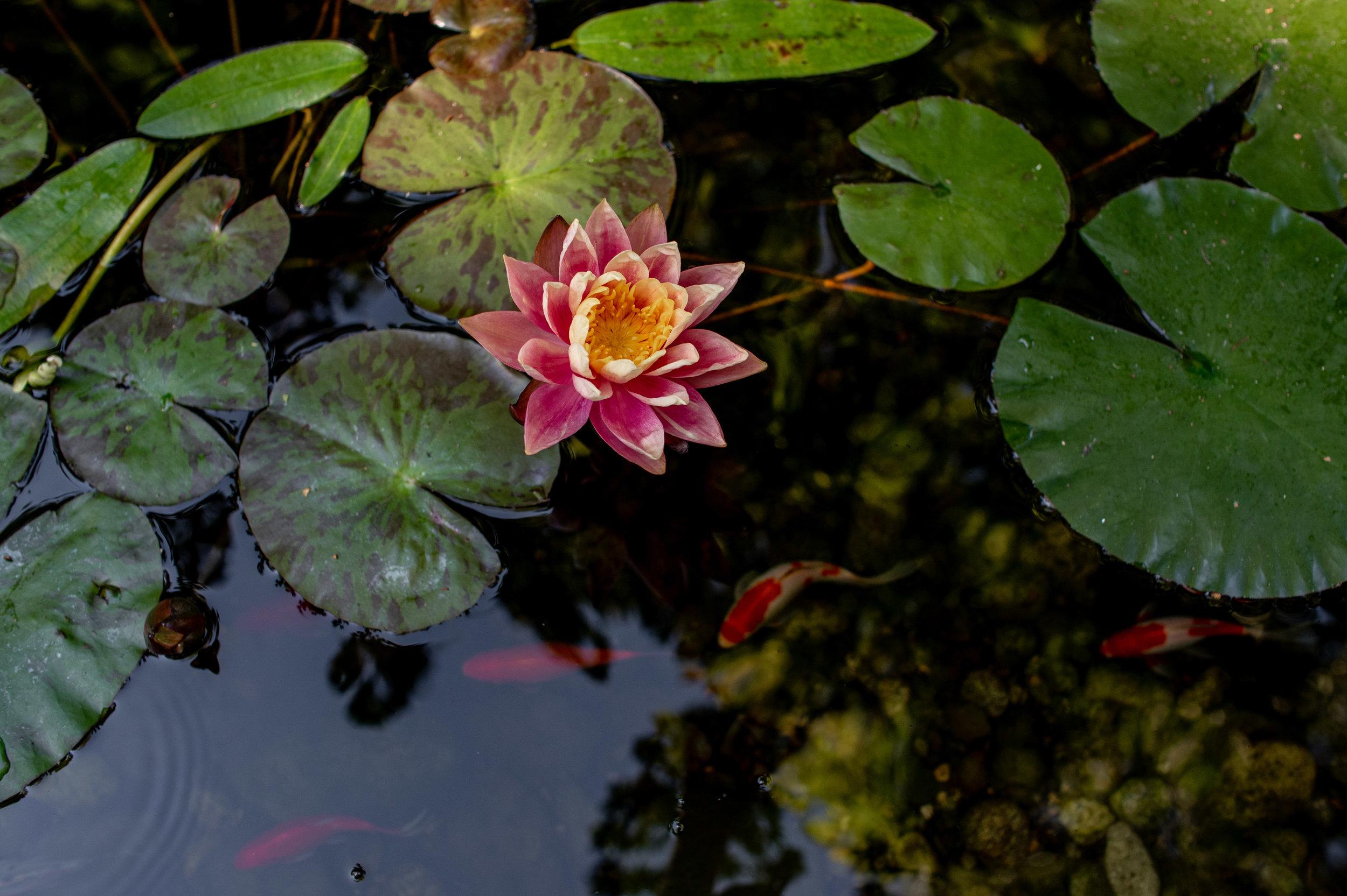 Black Lotus-67.jpg