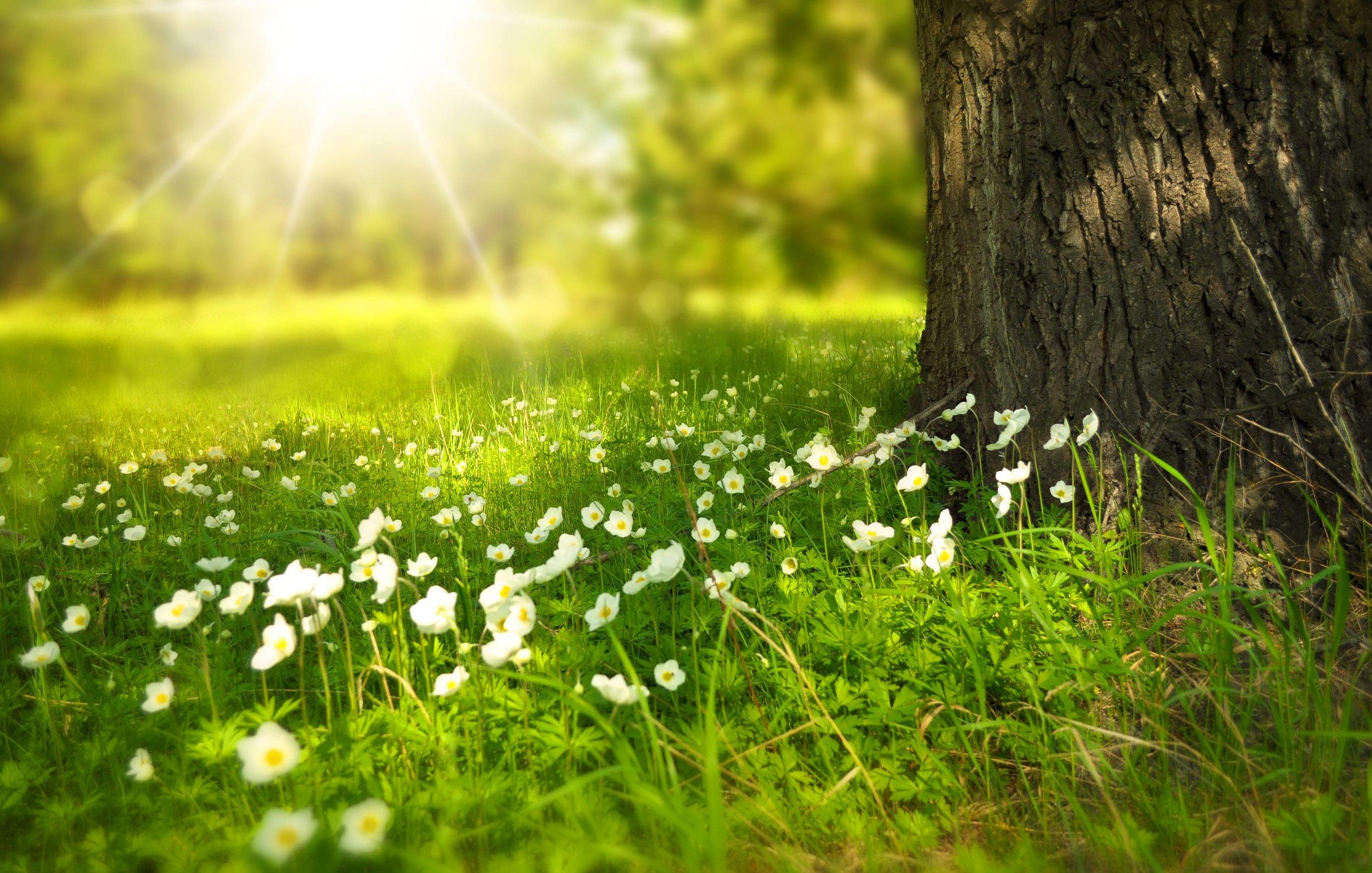 spring-tree-flowers-meadow-60006_mini.jpeg