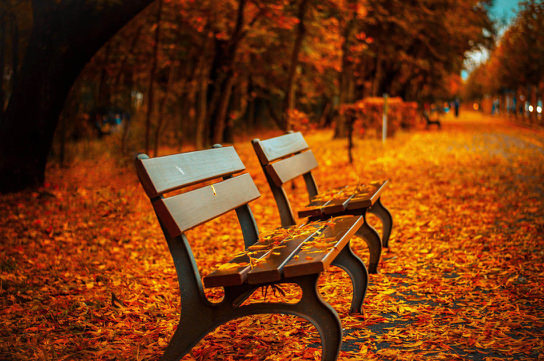 bench-fall-park-rest-40884.jpg