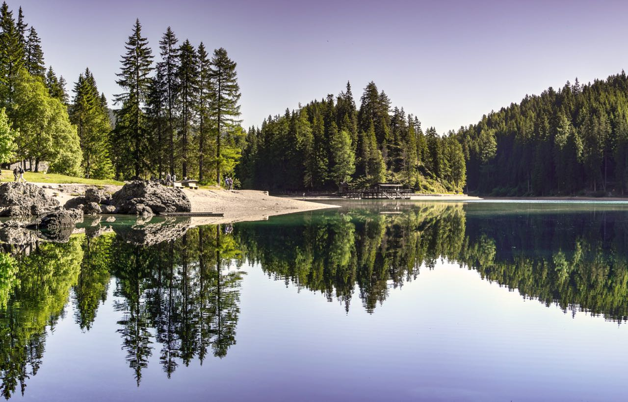 conifer-daylight-environment-454880 copy.jpg