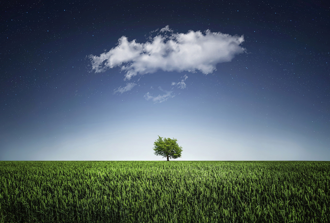 tree-natur-nightsky-cloud.jpg