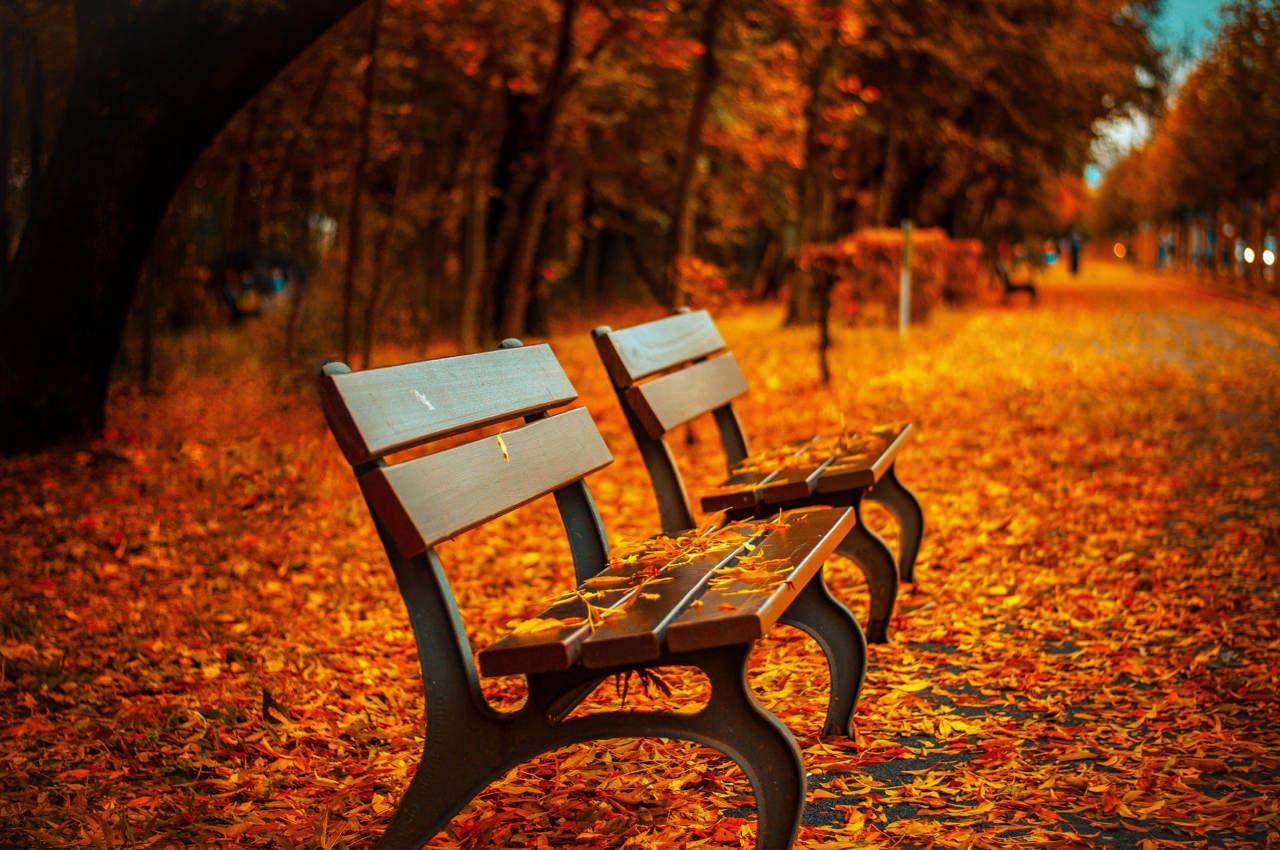 bench-fall-park-rest-40884.jpg
