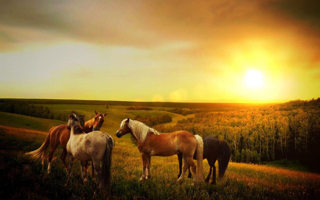 Horses Sunset.jpeg