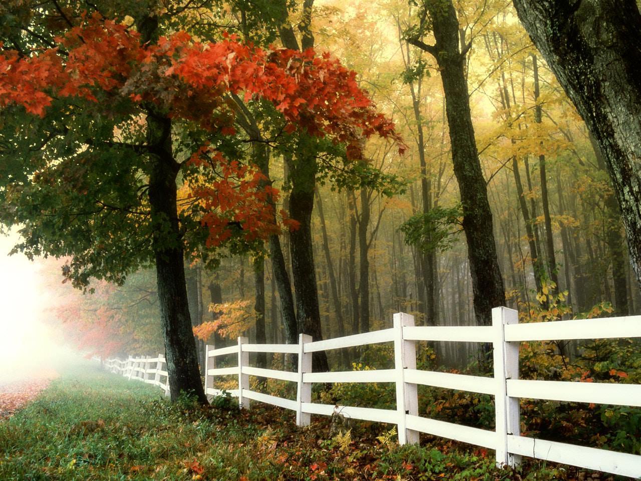Fence Autumn.jpeg