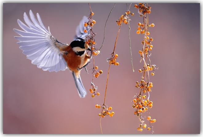Bird Berries - frame.jpg