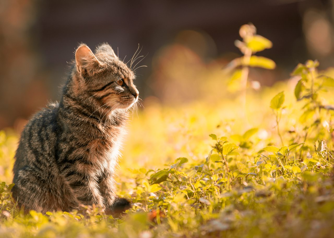 Kitten Flower.jpeg