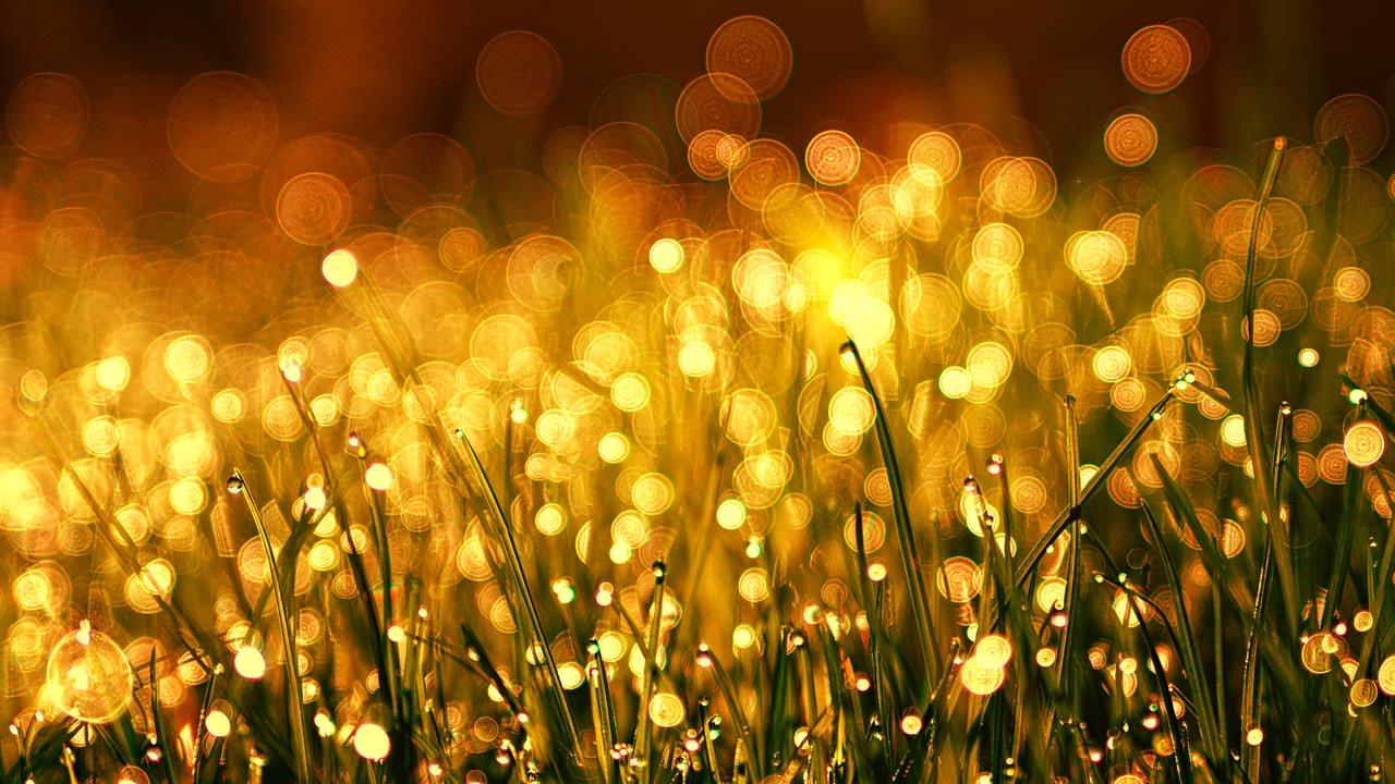 Golden Lighted Grass.jpeg