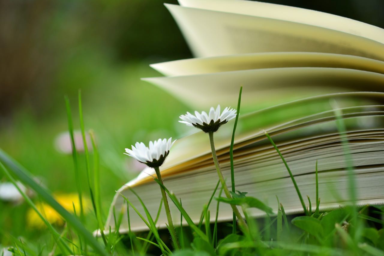 book pages and flowers-pexel.jpg