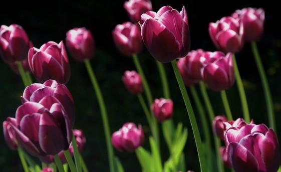 pinkpurplewhite.jpg