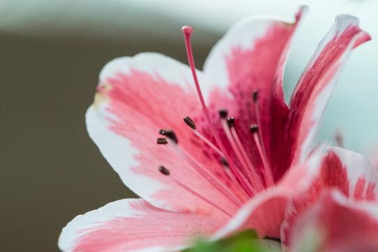 beautiful-beautiful-flowers-blooming-1038289.jpg