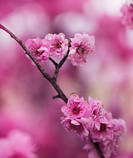 beautiful-beautiful-flowers-bloom-548375 (1).jpg
