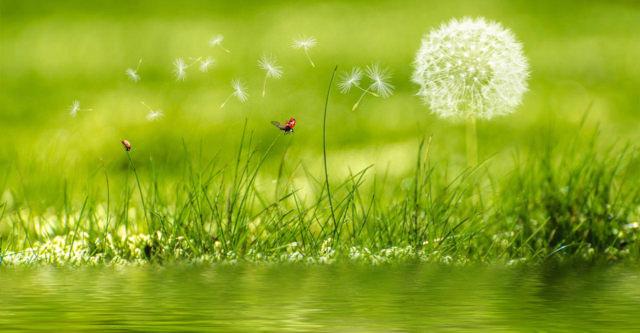 dandelionbutterfly.jpg