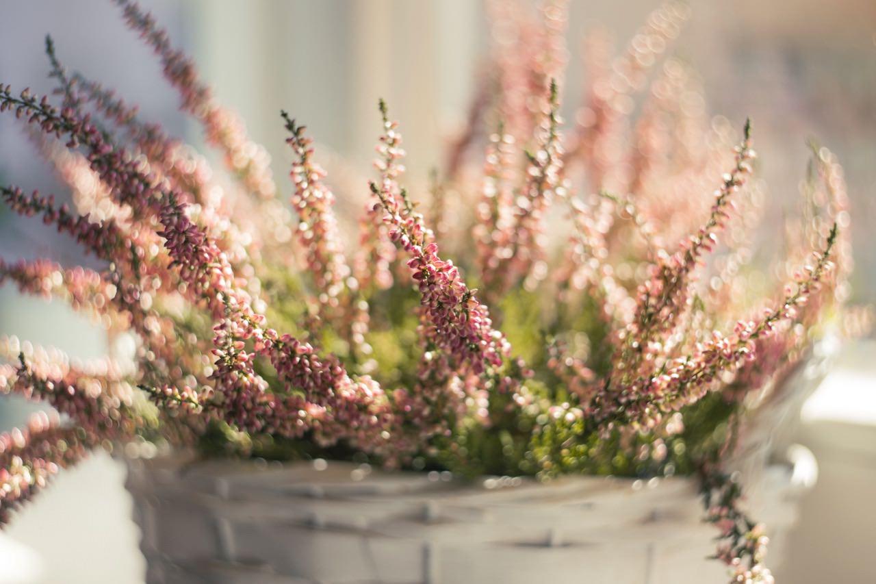 basket-beautiful-blooming-171295 (1).jpg