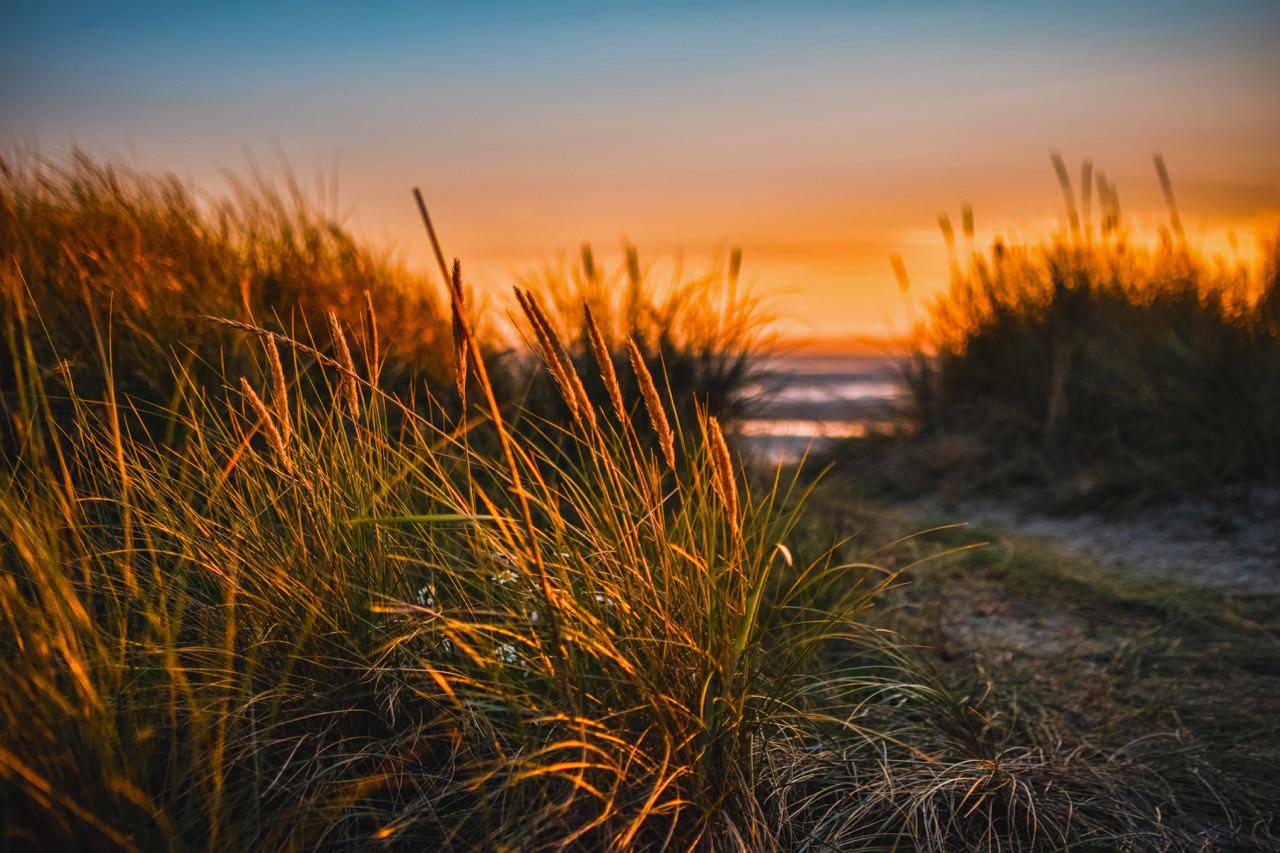 Sea Scape - Dunes.jpg