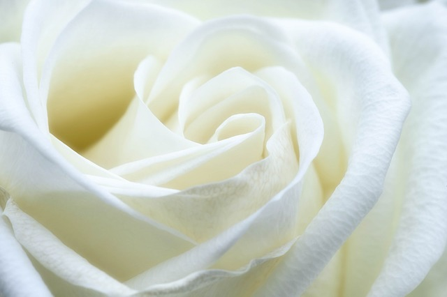 rose-1033202_640.jpg