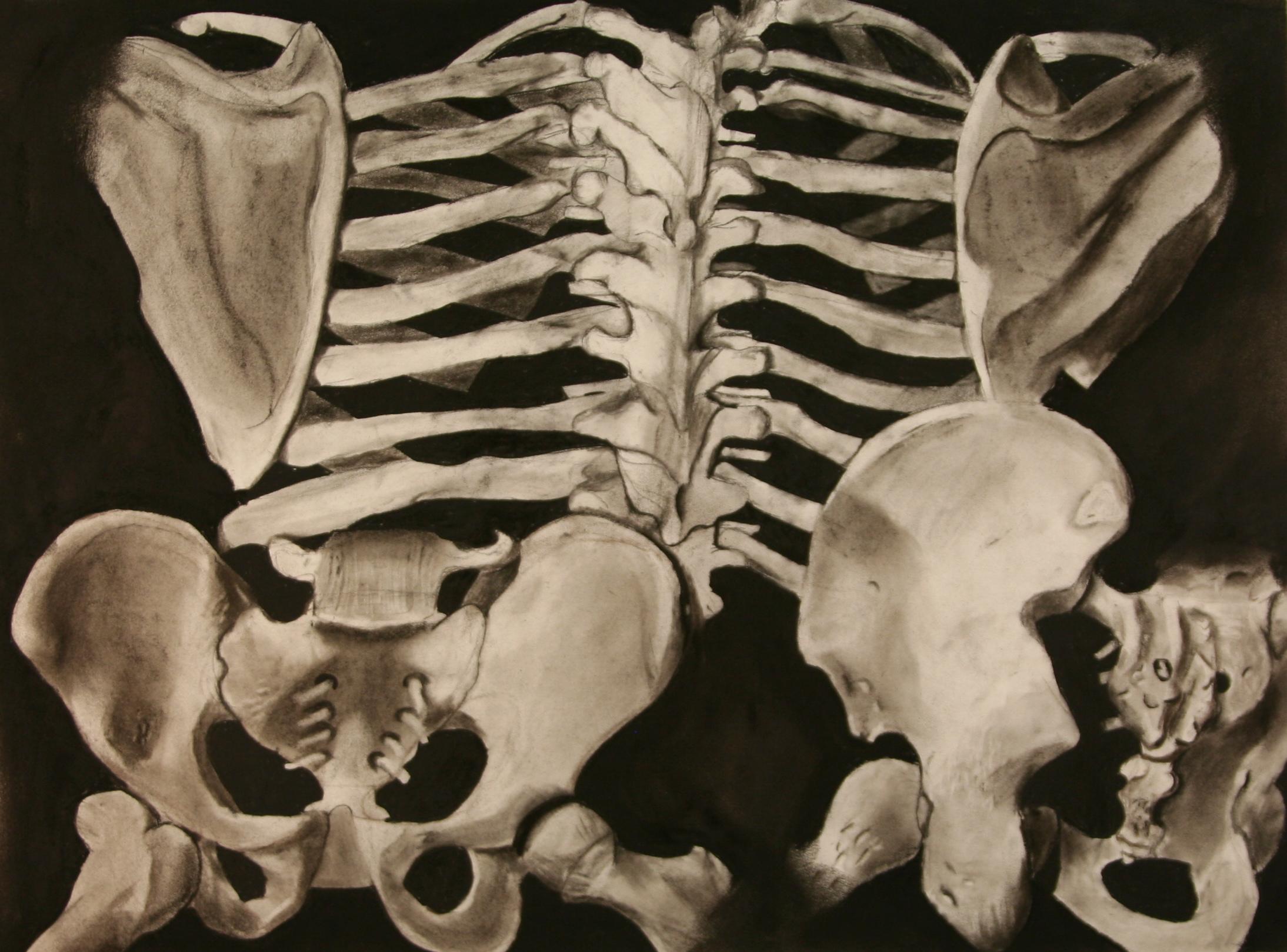 Skeletal-Limb-Studies_03.JPG
