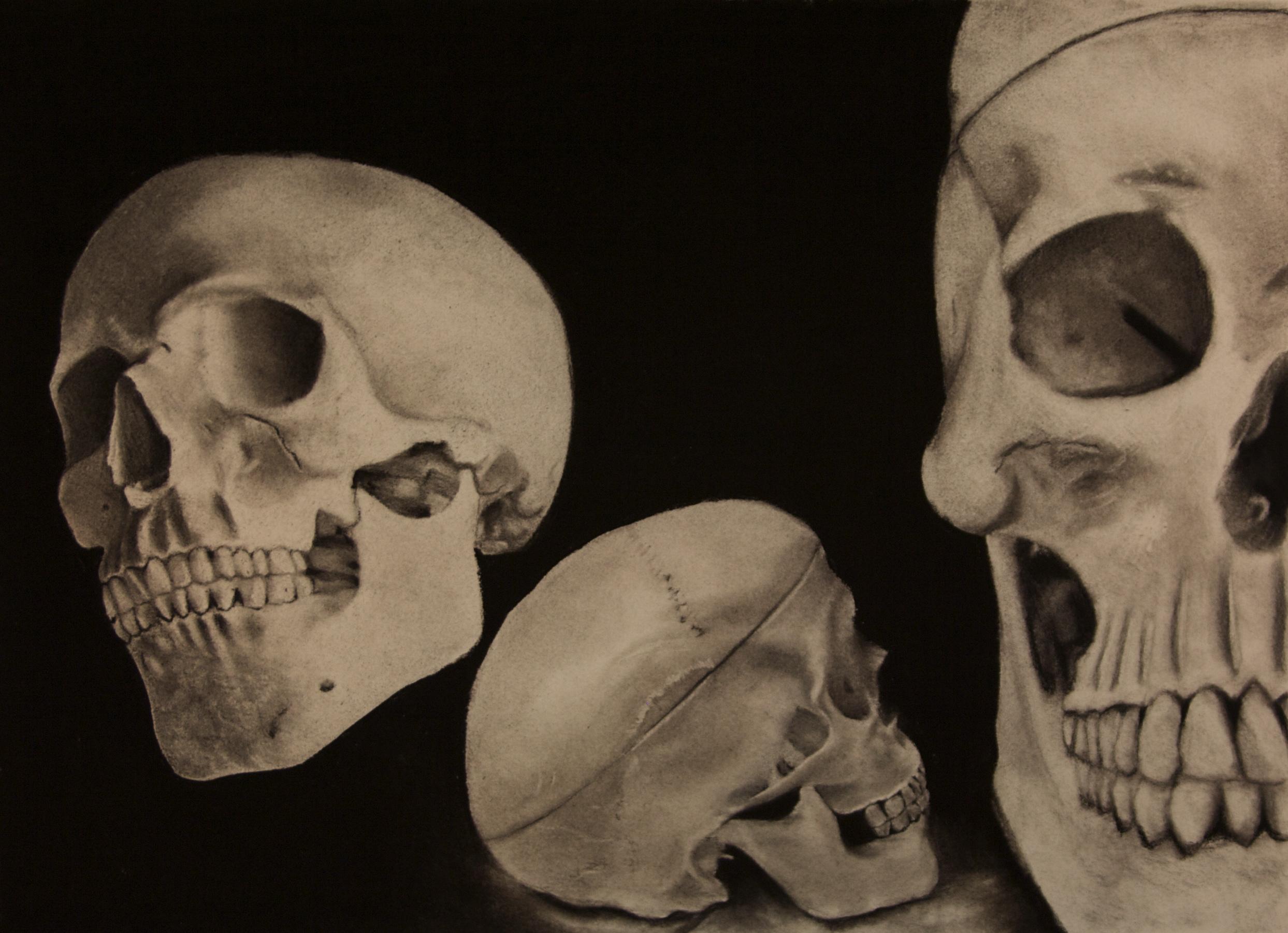 Skeletal-Limb-Studies_02.jpg