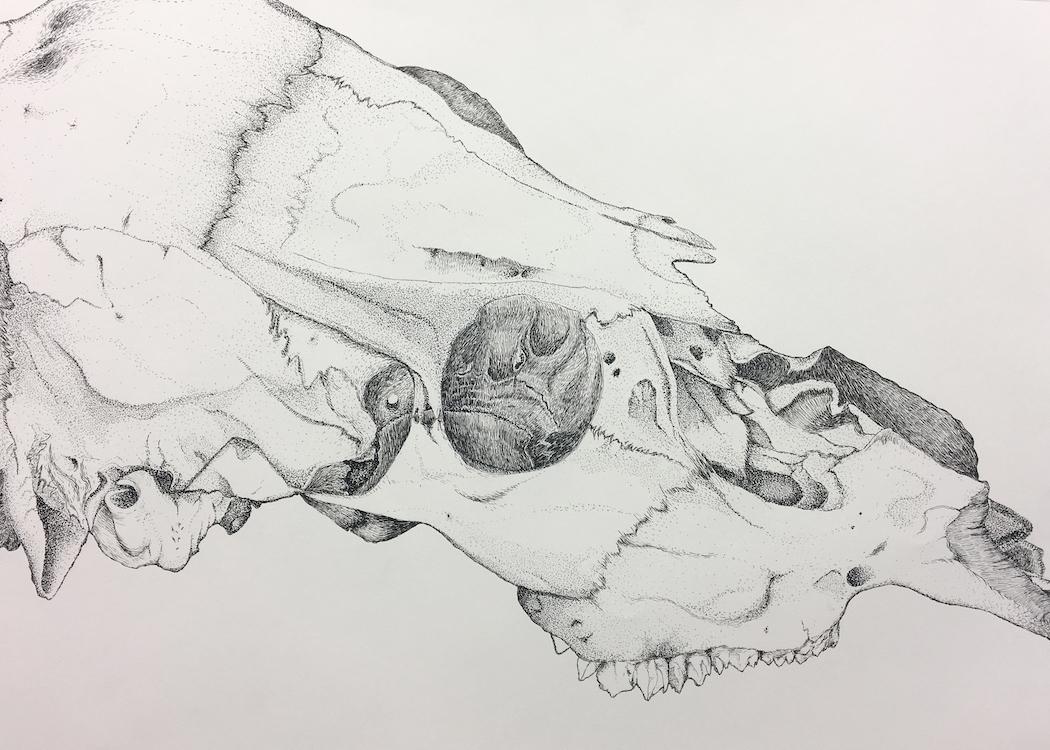 Skull sm.jpg