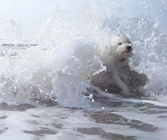 kip surf.jpg