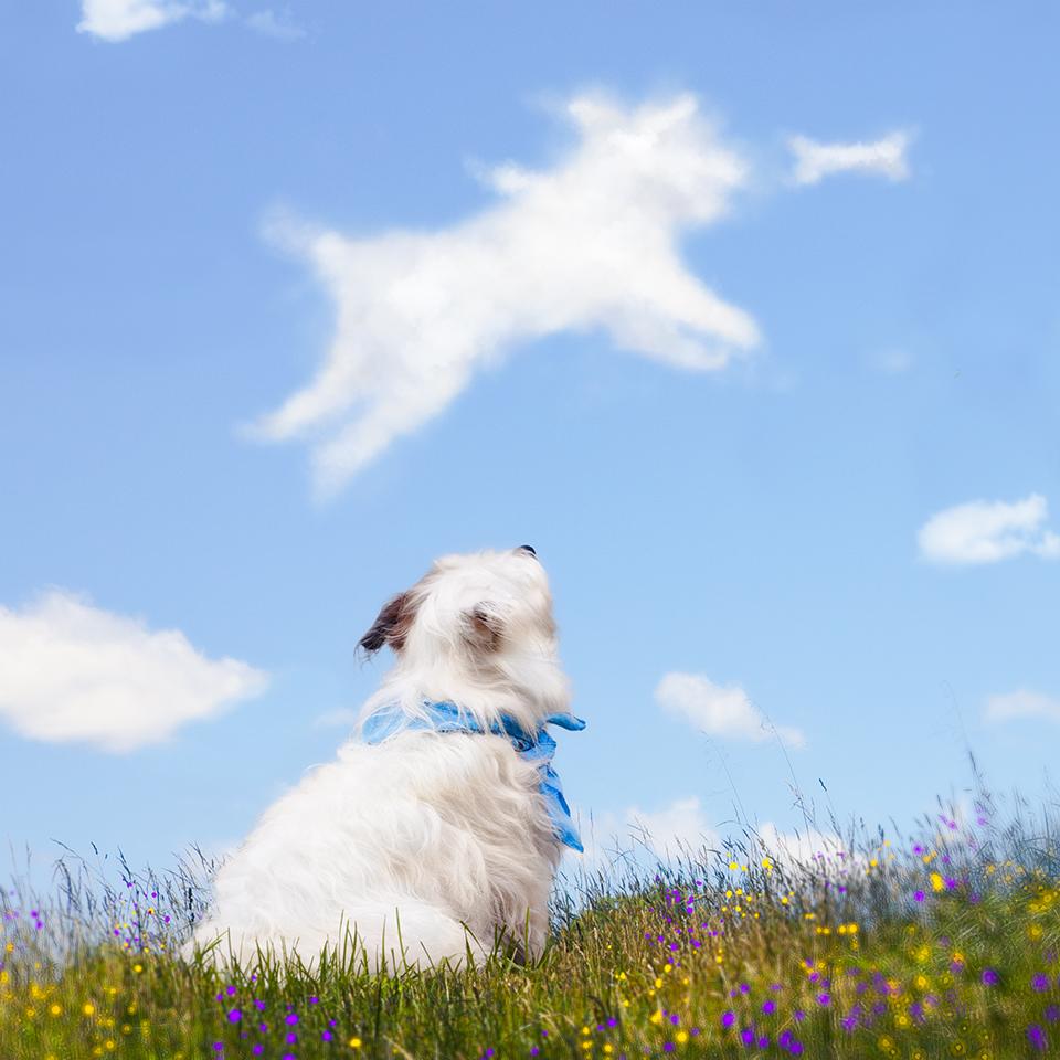 Kipper Cloud.jpg