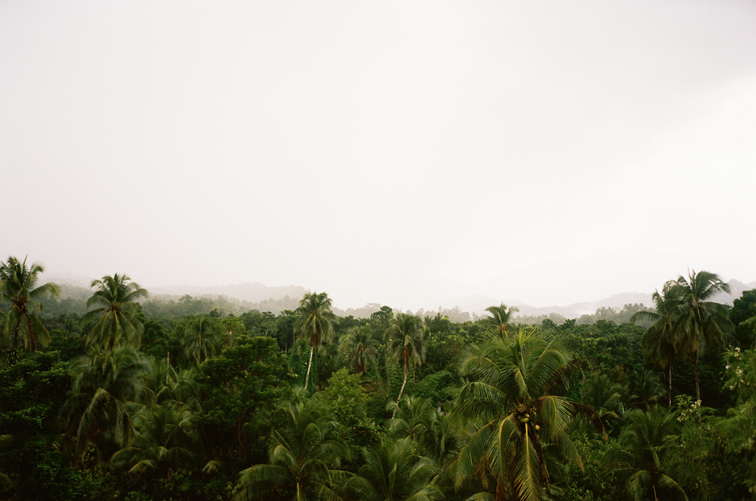 Film, mangoes and thunderstorms driving up the Blue Mountain