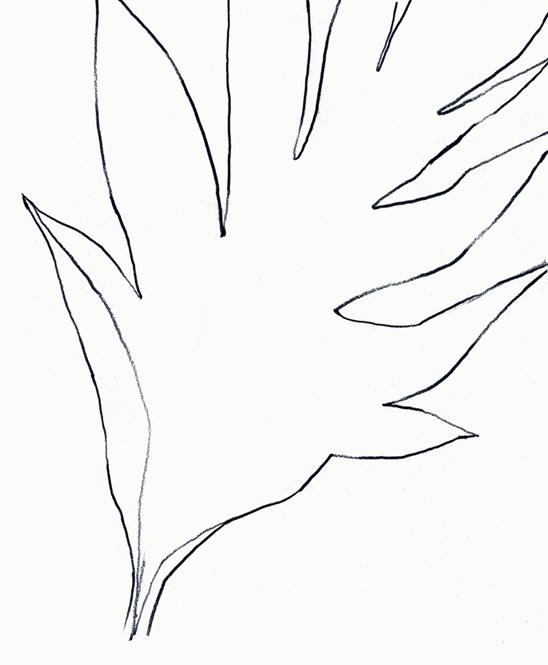 Breadfruit tree leaf, sketchbook drawing by me