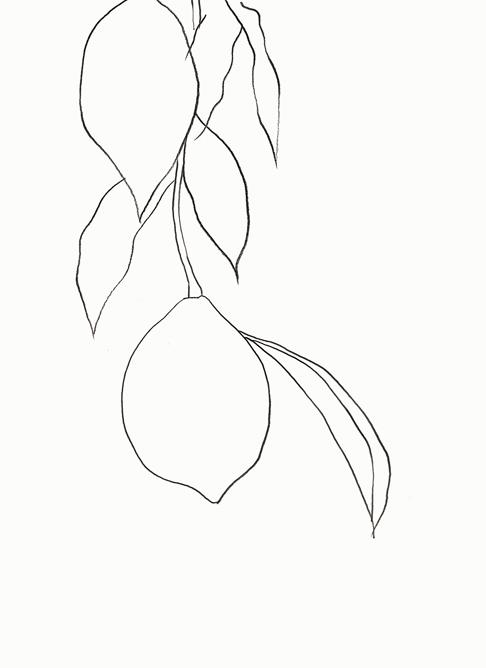 From my travel sketchbook, Lemon illustration by me