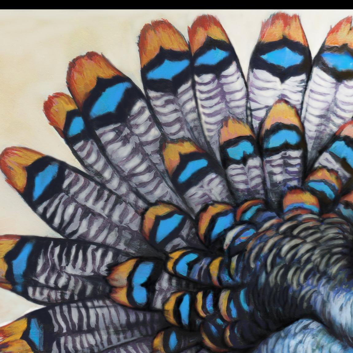 29 ocellated turkey.jpg