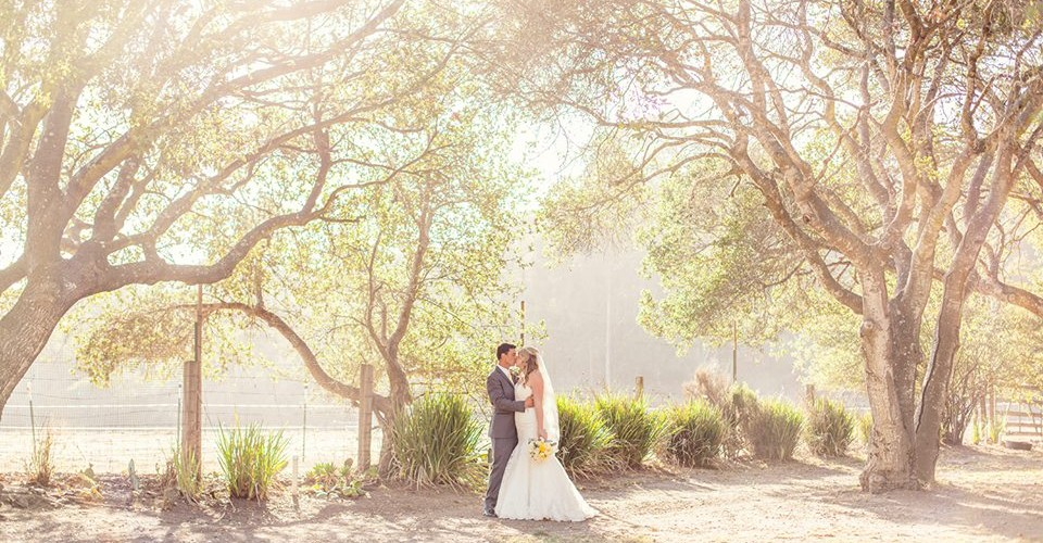 RS-oak-trees-960x500.jpg