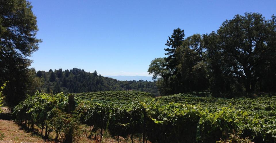 vineyard-960x500.jpg