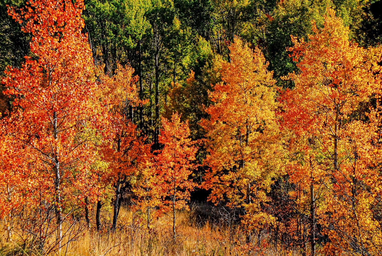 Fall Foliage near Winthrop
