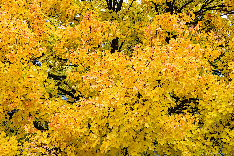 Fall Foliage in the Methow Valley / www.feedmywanderlust.com / © Jessica Cantlin