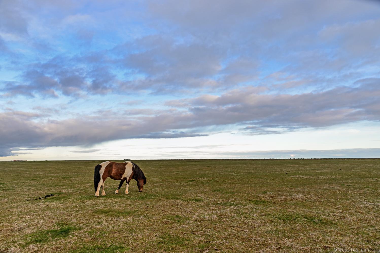 Horse at Midnight