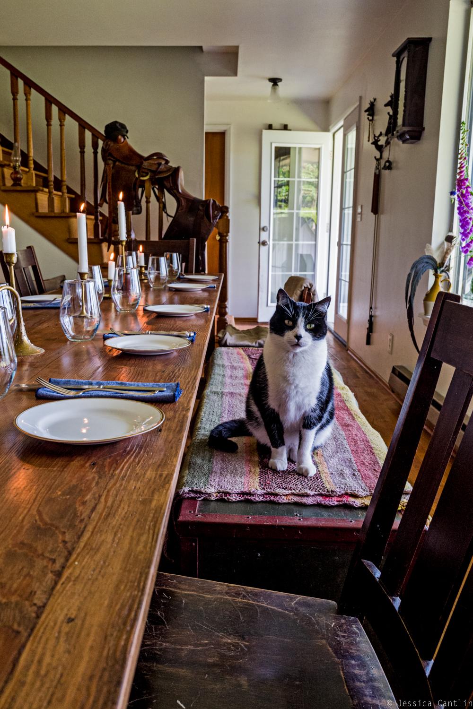 Dining companion at Circle Rock Ranch.