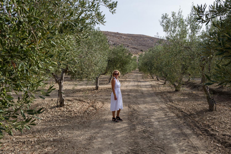 Mandranova's Olive Groves