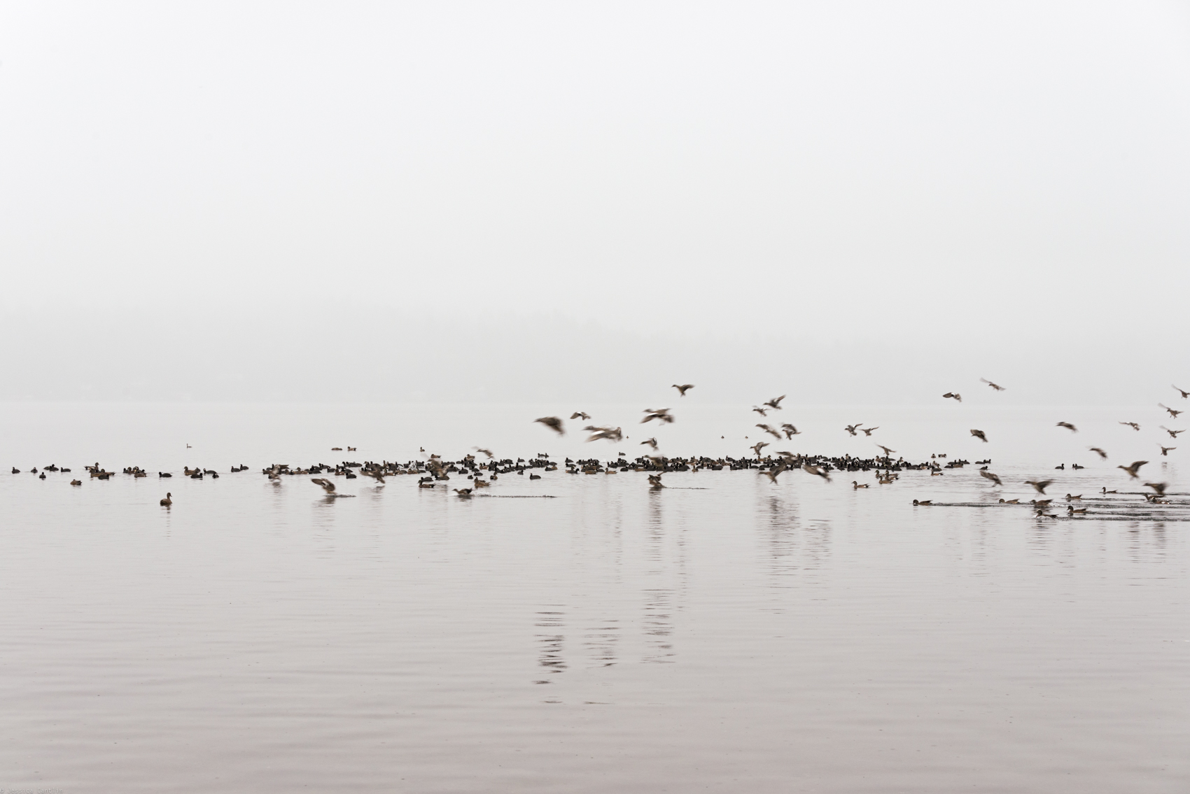 Birds in Fog No. 1 ★ Washington, 2015