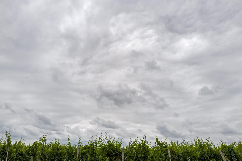 Vineyards of Medóc