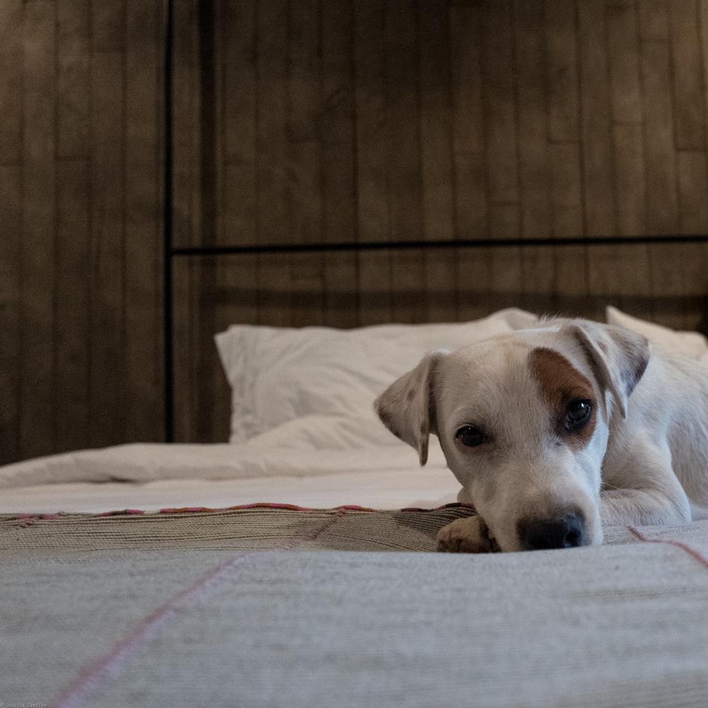 Hotel Mascot, Bruno.