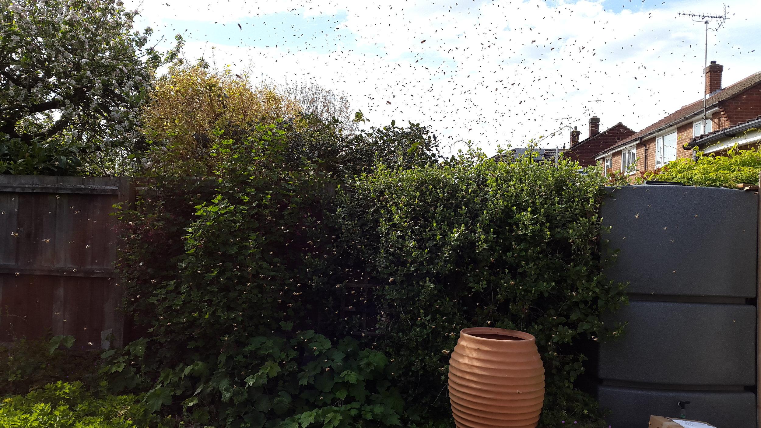 In the bee loud garden