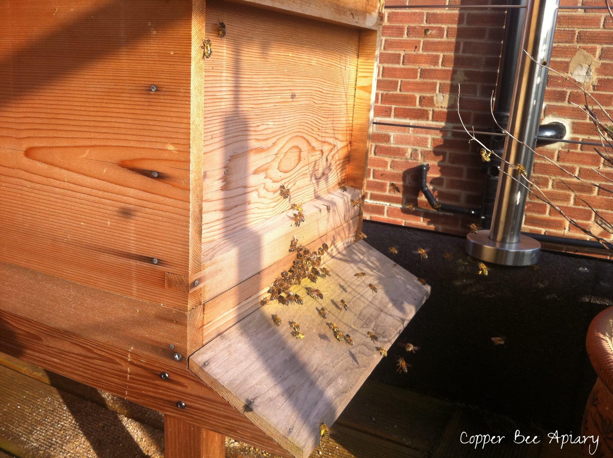 Cedar Hive