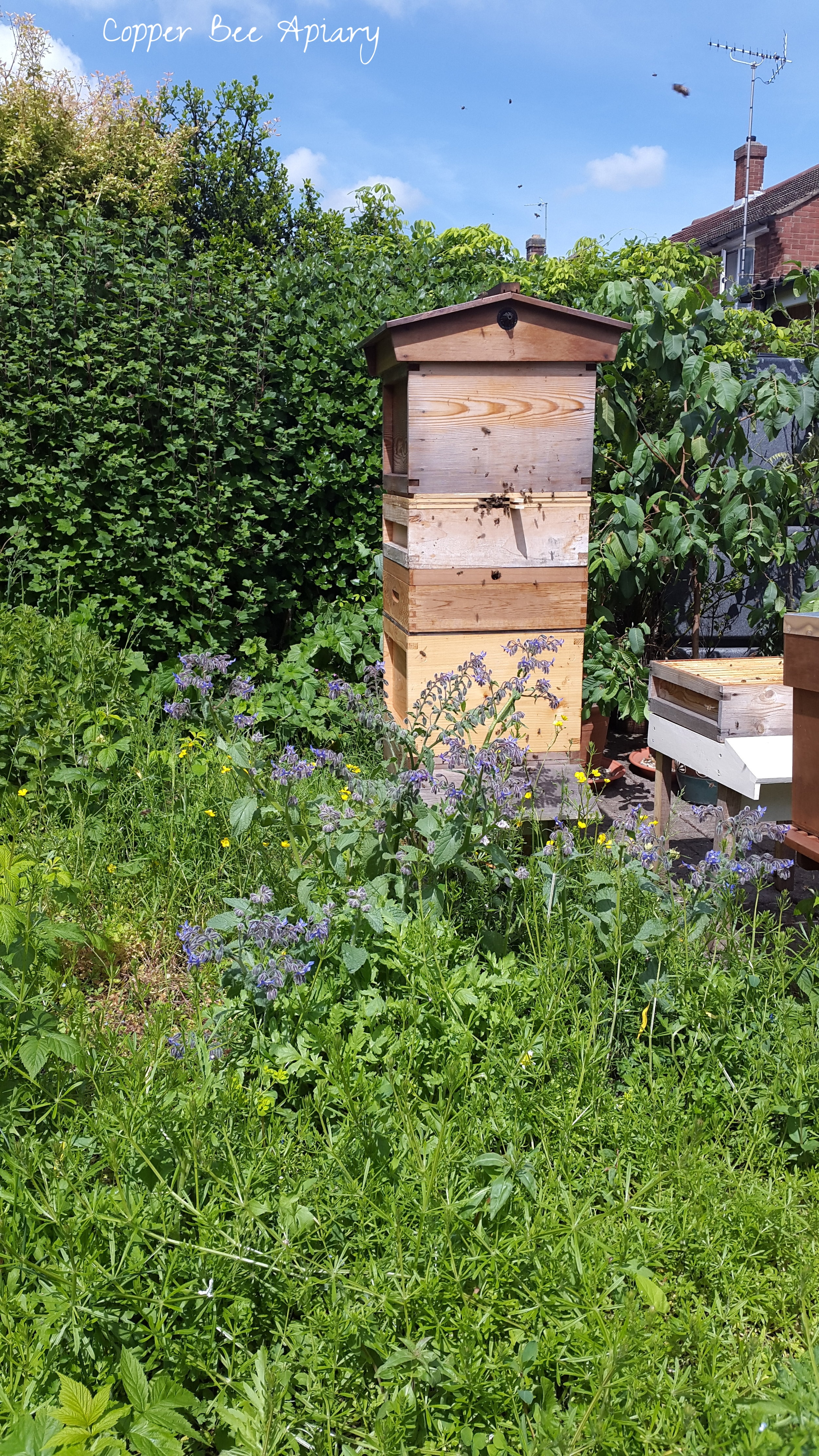 High-rise Copper Hive