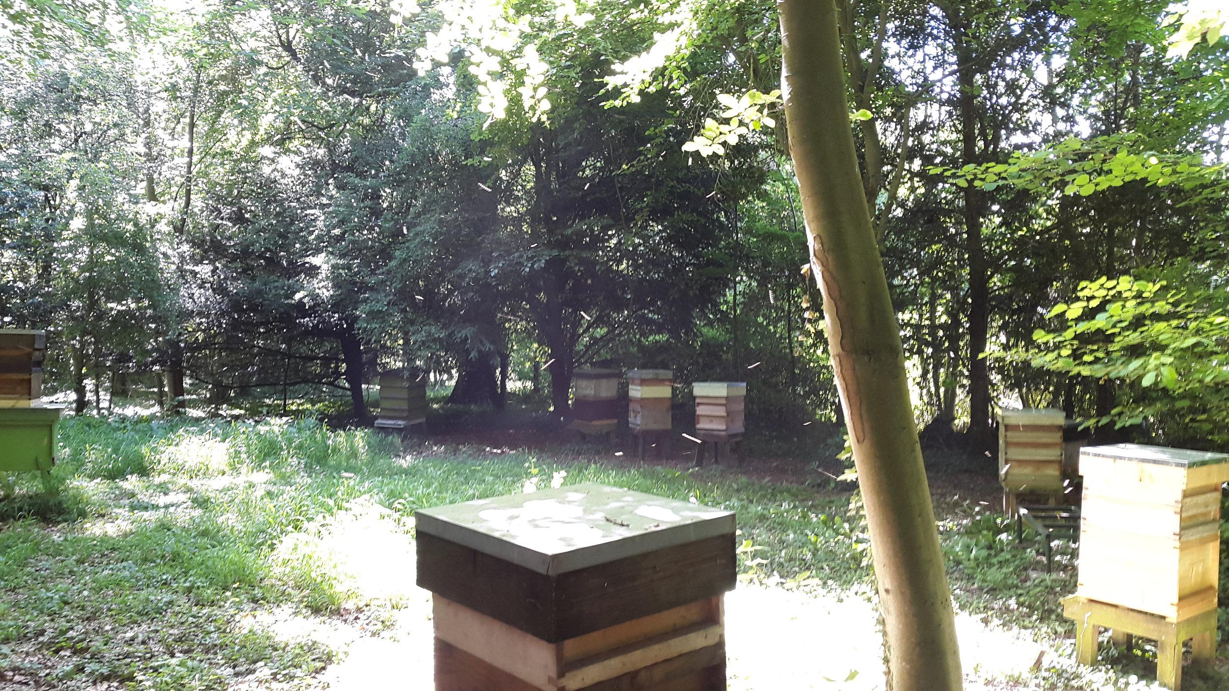 Wandlebury apiary
