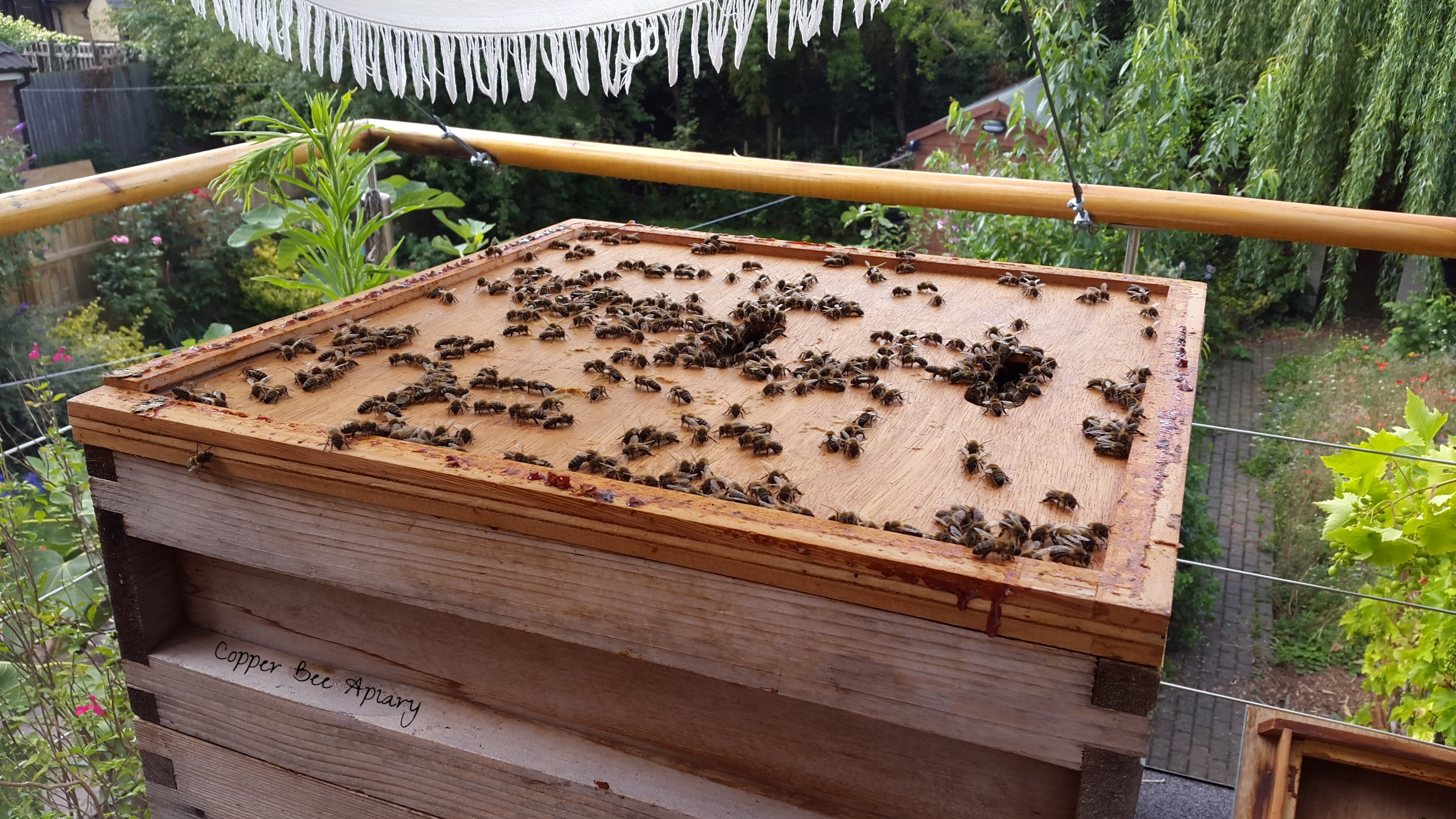 Bees on the crown board under the roof